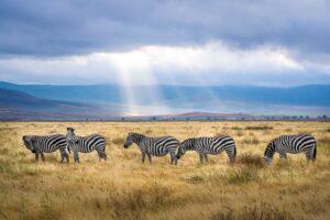Visita África con Travento